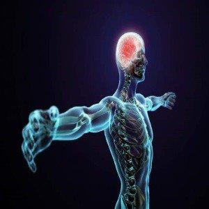 corpo humano