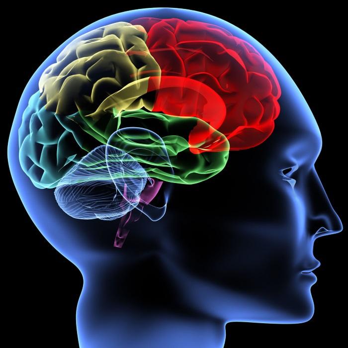 mente  estruturas de  linguagem   cérebro  memória   pensamento   corpo humano