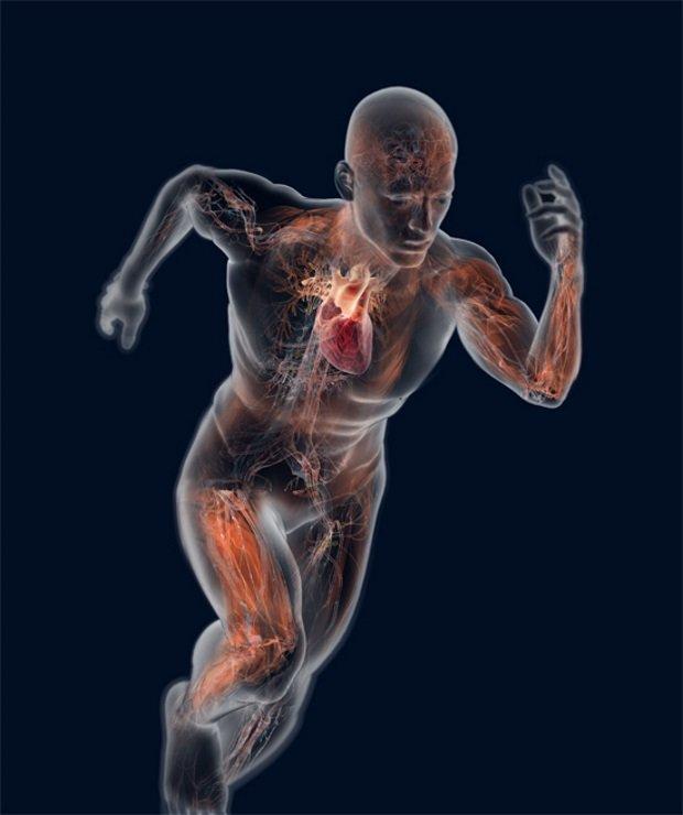 queimar gordura abdominal treino intensivo perder peso em semanas