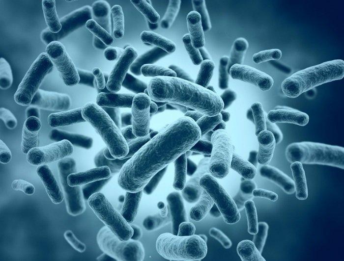 estrutura celular dos
